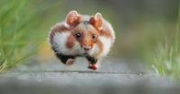 10 крутых фото о жизни диких хомяков для тех, у кого был тяжелый день