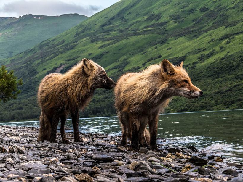 Лучшие пейзажные снимки 2017 года по версии National Geographic