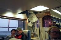 Поезд в парк снежных обезьян