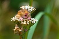 Для настроения: финалисты конкурса смешных фото животных Comedy Wildlife Photography