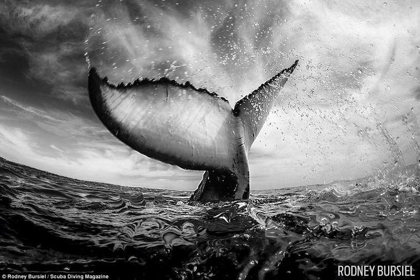 10 роскошных фото победителей конкурса подводной фотографии от Scuba Diving Magazine