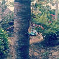 Живность в джунглях, август