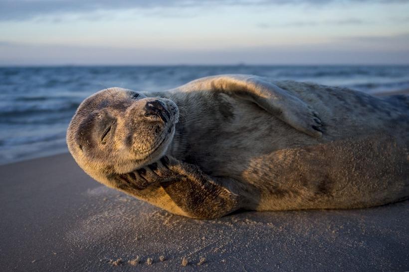 Nat Geo представил работы победителей конкурса фотографов природы 2017 года