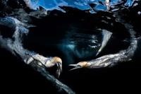 Победители конкурса Underwater Photographer of the Year