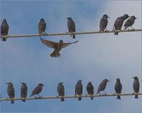 Почему птиц, сидящих на проводах, не убивает током