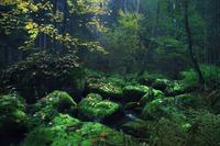 Потрясающие пейзажи Германии и Европы, где могли бы «ожить» сказки братьев Гримм