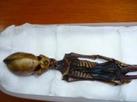 Расшифрован геном крошечного «инопланетянина»: он оказался человеком
