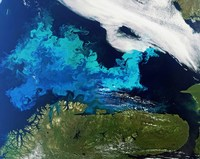 Масштабы впечатляют: выдающиеся природные объекты России в подборке космоснимков