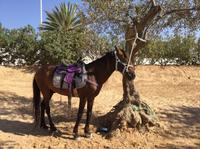 Прогулка на лошадях в Джербе в мае
