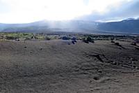 Чилийская Сьерра-Невада: араукарии на склоне