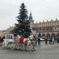 Карета ищет принцессу на площади Старого города