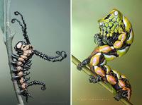 Леденящие душу макропортреты гусениц