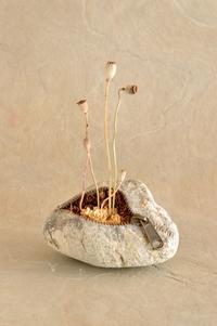 Странные, незабываемые скульптуры, сделанные из речных камней в Японии