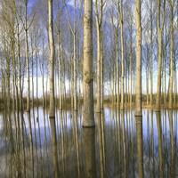 Фотографии или живопись: 12 невероятных пейзажей, запечатленных Чарли Уэйтом