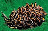 16 самых необычных животных нашей планеты, которых могла придумать только природа