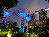 Волшебные деревья в садах у залива, Сингапур