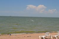 В Ейске всегда можно найти пляжи, где практически нет других отдыхающих