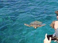 На Закинфе обитает много морских черепах