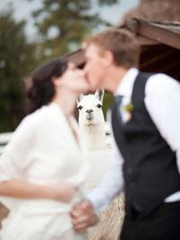 Пара поженилась в зоопарке Миннесоты — больше всех был удивлен медведь