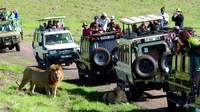 Танзания: экскурсия сафари-тур