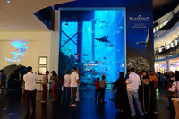 Дубай: я на экскурсии в Аквариуме