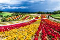 Японская цветочная ферма