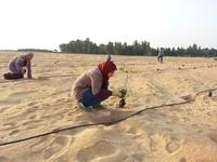 Египетское чудо: как в Египте вырастили более 200 гектаров леса посреди пустыни
