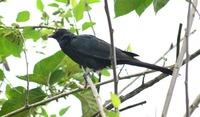Национальный парк Шри-Ланки Удавалаве