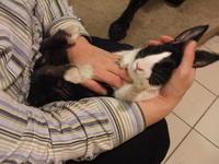 Реакция 13 животных, которым неожиданно погладили животик
