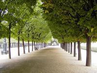 Деревья дают достаточно тени в жаркий день