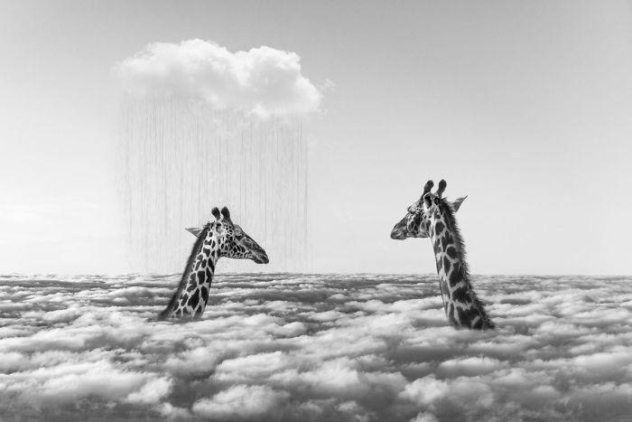Художник показывает, что делают животные, когда никто не смотрит