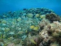 Невероятный подводный мир Мексики