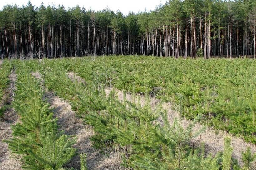 Выход найден: посадить 1 триллион деревьев и остановить глобальное потепление
