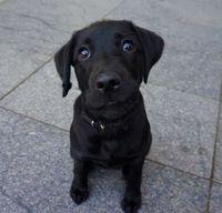 Дуэт фотографов сделал очаровательный фотоблог о собаках на улицах Вильнюса
