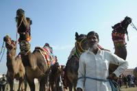 Фестиваль верблюдов в Биканере