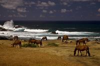 9 Вещей, которые вы можете встретить только на Острове Пасхи