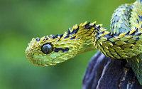 Животные экзотических стран, о существование которых вы не знали. Часть 2