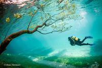 Чудо природы. Подводный парк Грин-Лейк в Австрии