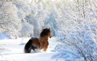 Пост обожания зимы