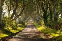 16 самых великолепных деревьев в этом мире