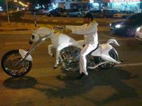 20 очень странных вещей, которые встречаются в Дубае каждый день