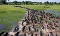 20 фото миграции животных, от которых захватывает дух