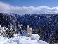23 фото необыкновенных приключений человека и его собаки на просторах дикой природы
