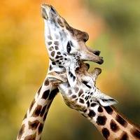 Любовь и дружба в мире животных