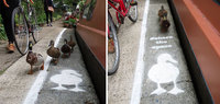Эти утки получили свои собственные полосы для прогулок на тротуаре!
