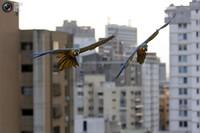 В этом городе невероятные птицы - не экзотика, а самые привычные и обыкновенные пернатые!