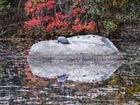 Осень в Нью-Джерси. Что может быть прекраснее?