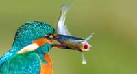 18 снимков животных со всей планеты с интереснейшим сюжетом