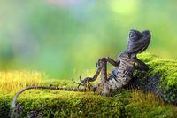 20 удивительных и прекрасных животных в фотографиях 2015 года