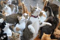 Пользователи сети буквально завалили этот японский кошачий остров едой для питомцев!